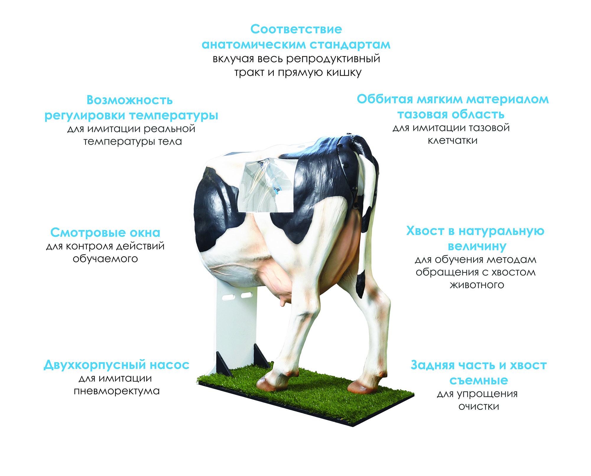 henryetta-cow-artificial- minitube-vetlikar