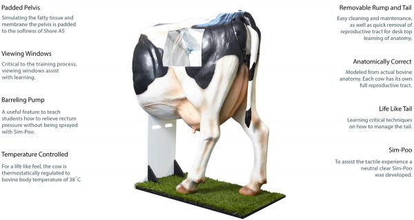 large_liccow