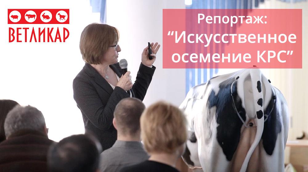 reportazh-iskusstvennoe-osemenenie-krs-vetlikar-ukraina-ua