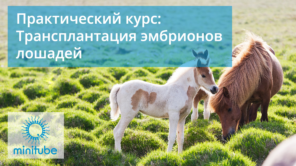 Prakticheskie-kursy-po-transplantacii-jembrionov-loshadej-vetlikar