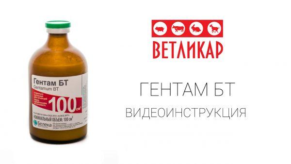 gentam-bt-vetlikar-beleka