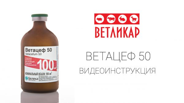 ветацеф-50-vetlikar-beleka